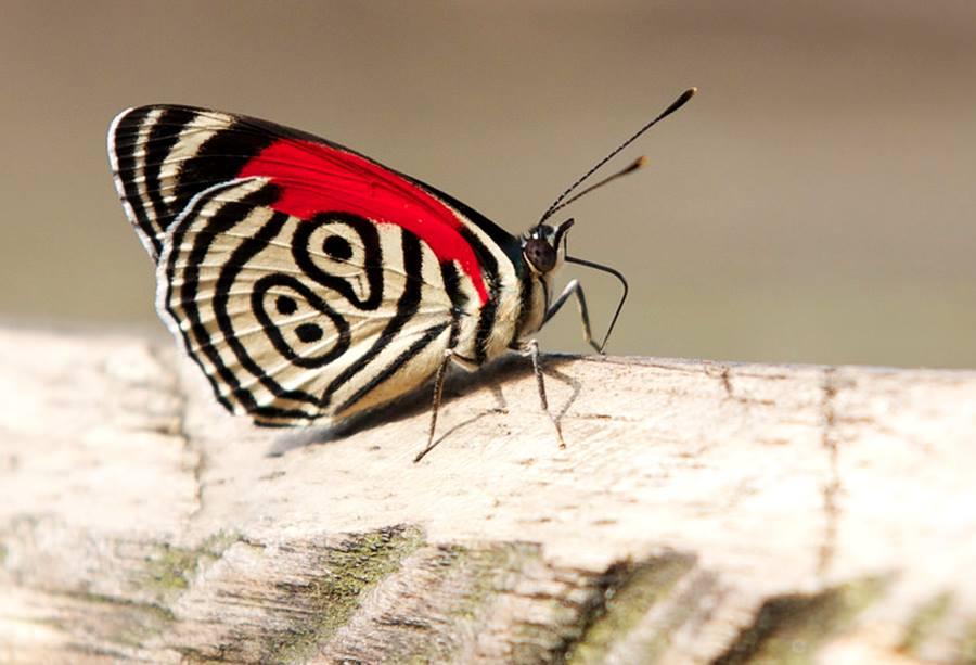 butterfly 89