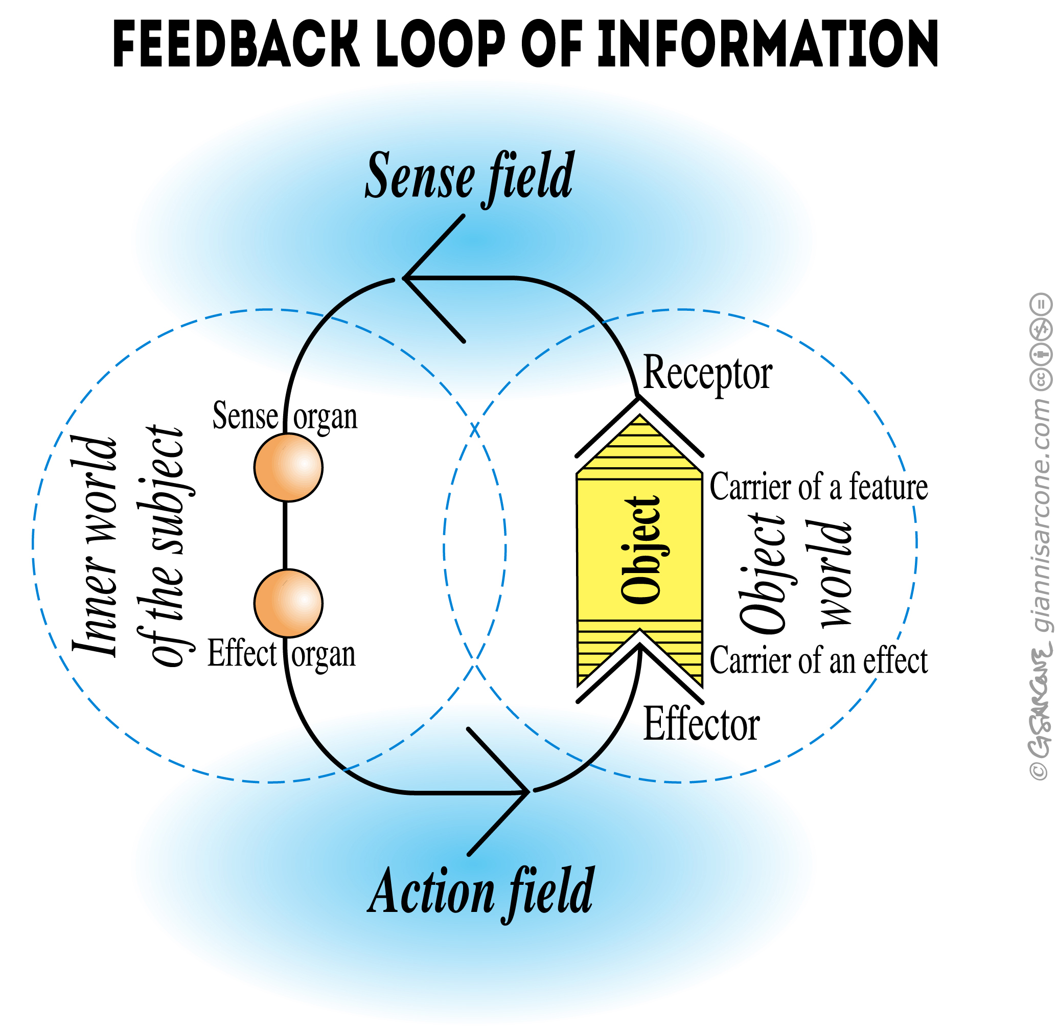 feedback loop of information