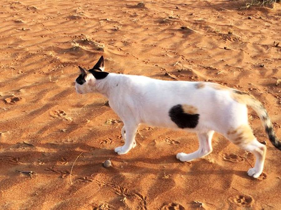 hollow cat 2